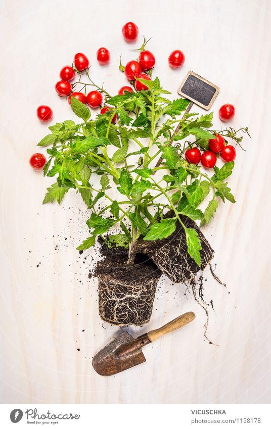 Tomaten Jungpflanze mit Schaufel und Pflanzenschild. Lebensmittel Gemüse Stil Design Gesunde Ernährung Sommer Garten Tisch Gartenarbeit Natur Frühling