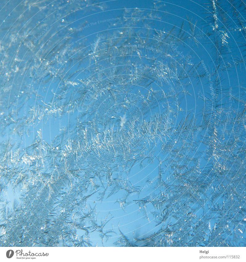 Eiszauber.... Natur schön Himmel weiß blau Winter kalt Fenster Eis glänzend Frost Vergänglichkeit gefroren frieren Fensterscheibe Schnellzug