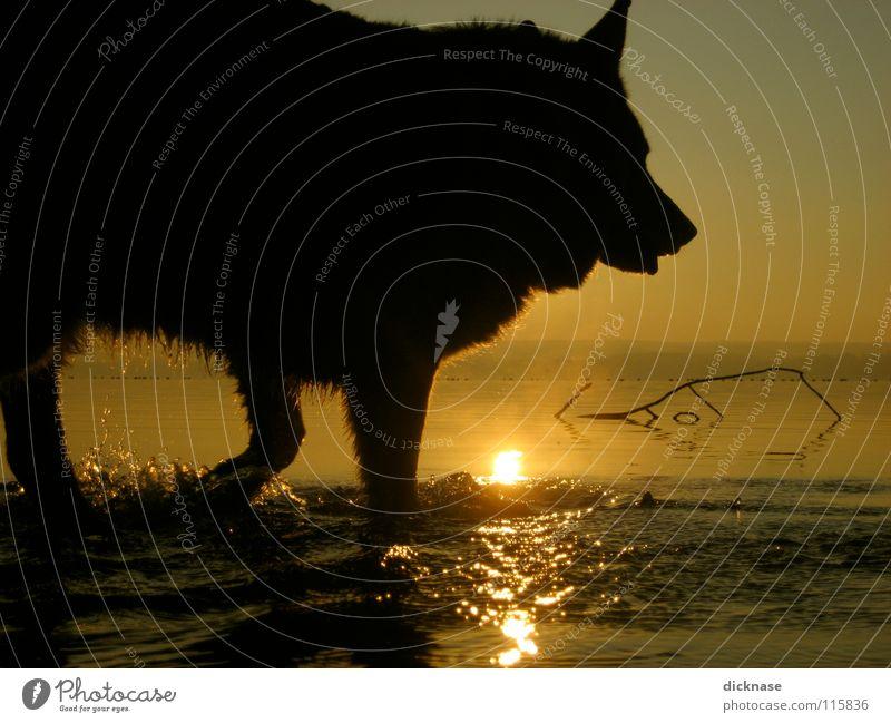 Dicknase herself... Wasser Sonne Tier Hund See nass Schwimmen & Baden Wassertropfen Fell Haustier Bildausschnitt Anschnitt Wasserspiegelung Haushund Gassi gehen Vor hellem Hintergrund