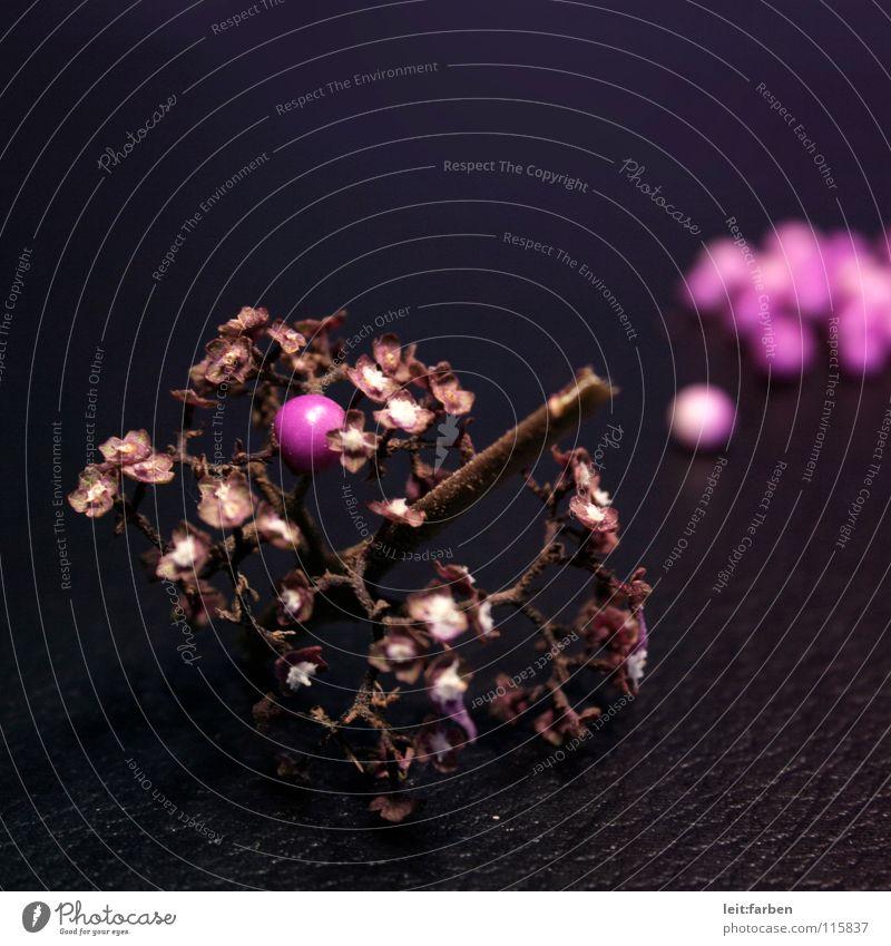 beere! weiß schwarz Einsamkeit rosa Sträucher violett Vergänglichkeit Ernte Leder Beeren gepflückt