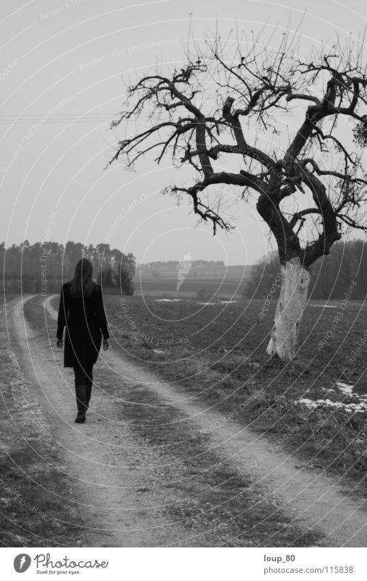 promenade d'hiver Winter Monochrom Baum Spaziergang Schwarzweißfoto Mensch Einsamkeit Wege & Pfade