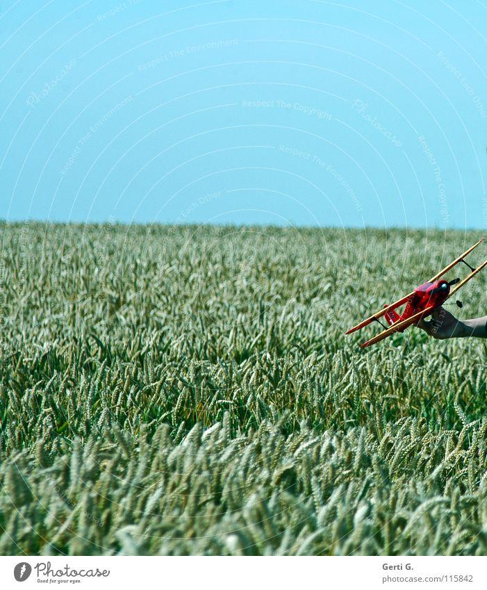 simulatin*g Modellflugzeug Weizenfeld Horizont Blauer Himmel Klarer Himmel Wolkenloser Himmel Spielen Sommer Kindheitserinnerung
