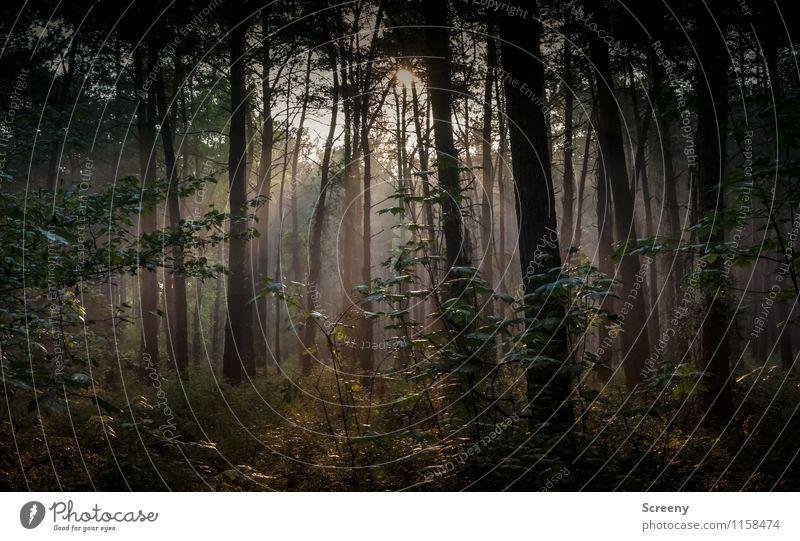 Still und ruhig... Umwelt Natur Landschaft Pflanze Sommer Baum Sträucher Wald Wachstum Gelassenheit geheimnisvoll Idylle Farbfoto Außenaufnahme Menschenleer