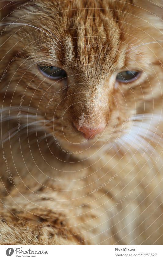 Verträumter Blick Katze Tier Garten träumen Zufriedenheit süß Haustier Tiergesicht kuschlig
