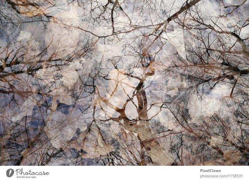 Laub Natur Pflanze Baum Einsamkeit Landschaft Blatt Tier Wald Traurigkeit Gefühle Gras Stil Holz braun Stimmung Park