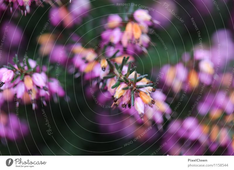 Blüten Lifestyle elegant Stil schön Ferien & Urlaub & Reisen Landwirtschaft Forstwirtschaft Natur Pflanze Blume Sträucher Grünpflanze Wildpflanze Garten Park