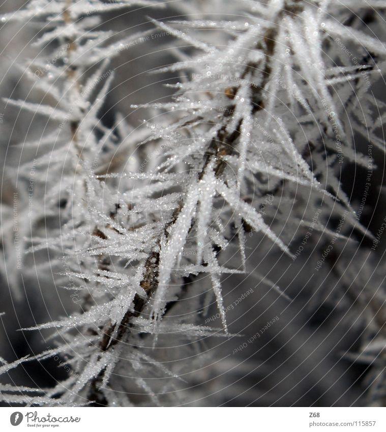 Eiswelt weiß Winter ruhig kalt Schnee Ast gefroren frieren Kristallstrukturen Raureif Eisblumen erfrieren