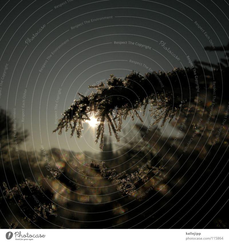 winterwonderland Winter Schnellzug Nebel frieren weiß Raureif Kühltruhe Physik Brand Pflanze Sträucher Märchen fantastisch Wunder Romantik träumen glänzend