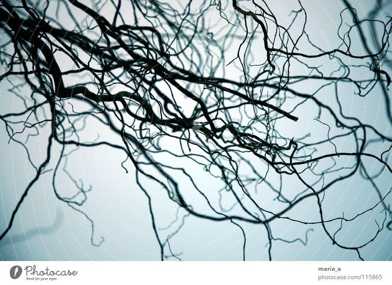 gruselgestrüpp Baum blau schwarz dunkel Angst Wachstum Sträucher Ast fangen gefangen Tiefenschärfe Panik unheimlich