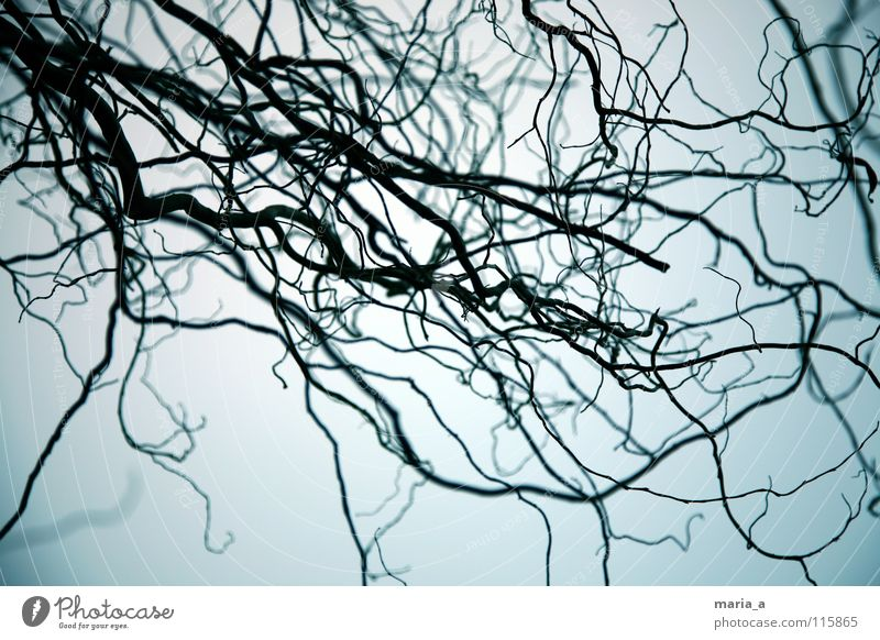 gruselgestrüpp Sträucher Baum dunkel unheimlich fangen gefangen Wachstum Angst Panik Dämmerung schwarz Tiefenschärfe Ast kringelig krüppelig dämmern blau