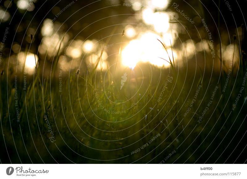 Wiesenliegen Sommer Gegenlicht Physik rot grün Gras Erholung Sonnenuntergang Romantik Feld Baum Geborgenheit ruhig Mitte dunkel Denken Trauer
