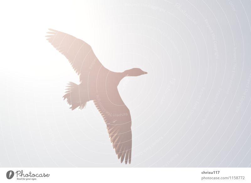 Sonnenvogel Himmel Natur Erholung ruhig Tier Frühling natürlich grau fliegen hell Vogel Luft Wildtier ästhetisch Lebensfreude Schönes Wetter