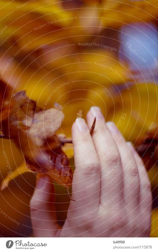 Herbstgreifen Blatt Physik färben rot gelb zart Vorsicht berühren Hand Finger festhalten ruhig Zärtlichkeiten Schwäche Wärme Farbe fallen orange fangen
