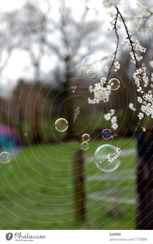 Frühlingsblubb weiß grün schön Baum Wiese Blüte zart Zaun Seifenblase Vorsicht Blubbern