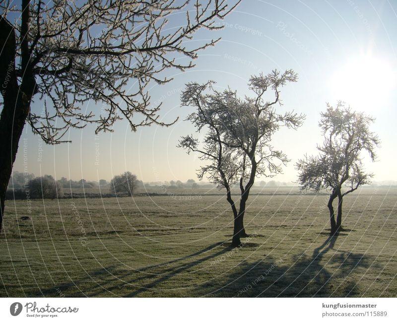rauhreif weiß Baum Winter Schnee Landschaft Eis Ast Schnellzug Raureif schlechtes Wetter
