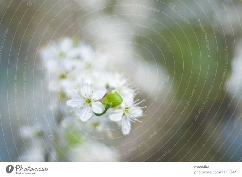 Baum- und Blütenblumen natürlich - ein lizenzfreies Stock Foto von ...