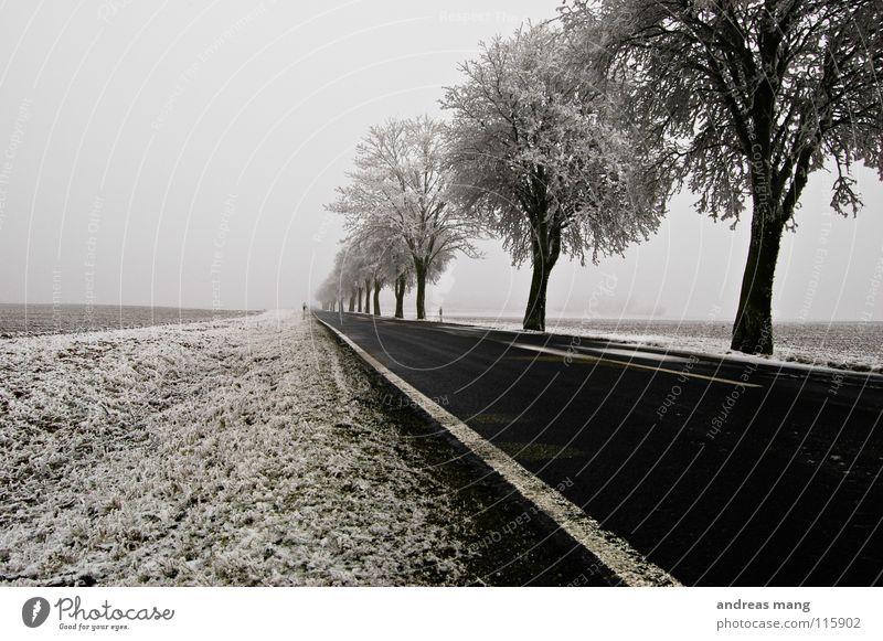 Der Weg ins Ungewisse weiß Baum Winter Ferne Straße kalt Schnee Eis Feld trist Streifen Raureif Seitenstreifen