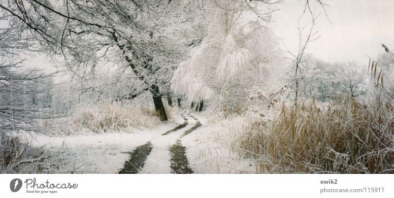 Weißer Waldweg Ferne Winter Schnee Umwelt Natur Landschaft Pflanze Urelemente Erde Himmel Wolken Klima Wetter Schönes Wetter Eis Frost Baum Sträucher Park