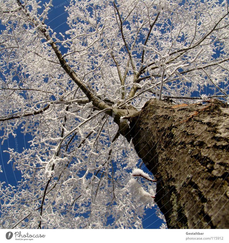 und so riecht der Winter I schön Himmel weiß Baum Lampe kalt Schnee Eis glänzend Beginn Frost Ende Vergänglichkeit Jahreszeiten Baumstamm