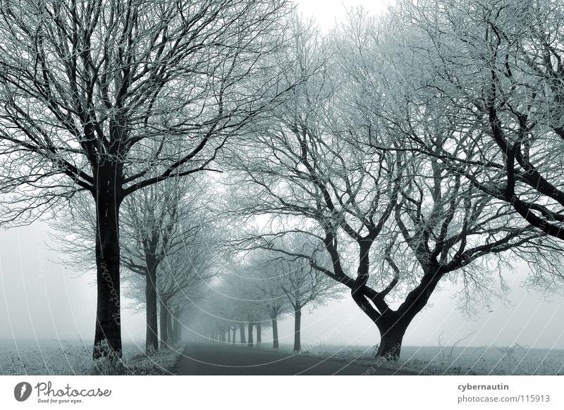 nebulös Allee Baum Winter kalt Raureif Nebel Wetter Ast Straße Frost Eis Schnee