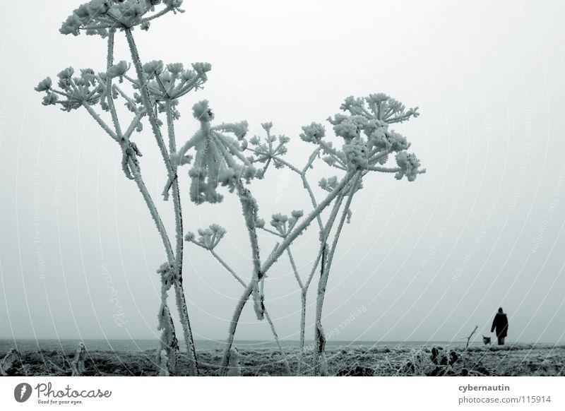 eisig Winter kalt Raureif Nebel Stauden Feld Horizont Hund Einsamkeit besinnlich Frost Eis Schnee Rispe Ferne leer Spaziergang