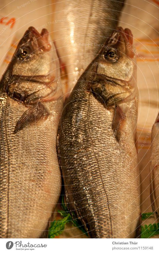 Frisch gefangen Tier Gesundheit Essen Lebensmittel Gesundheitswesen glänzend liegen frisch Ernährung Fitness Wellness Fisch lecker sportlich Wohlgefühl