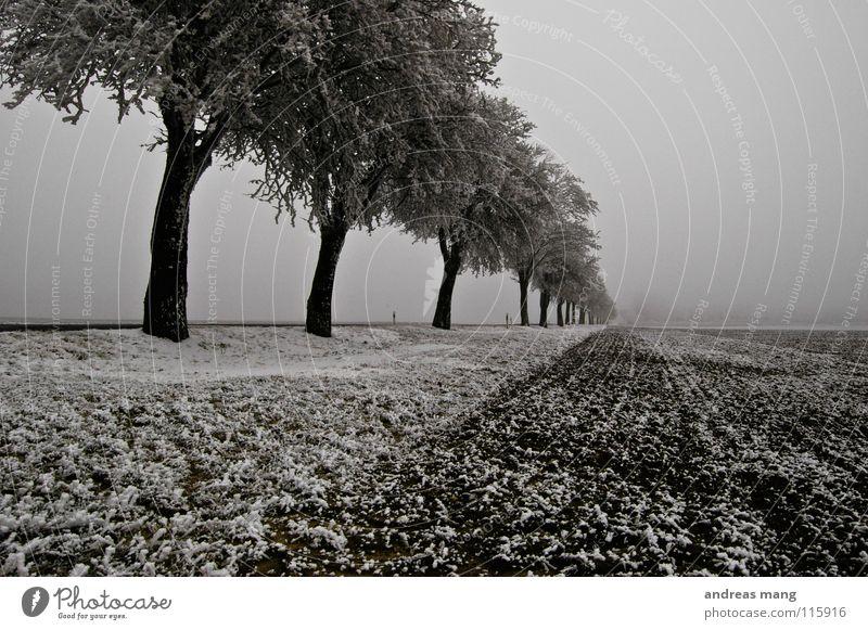 Die Welt in Schwarz/Weiß weiß Baum Winter Ferne Straße kalt Schnee Eis Feld trist Streifen Raureif Seitenstreifen