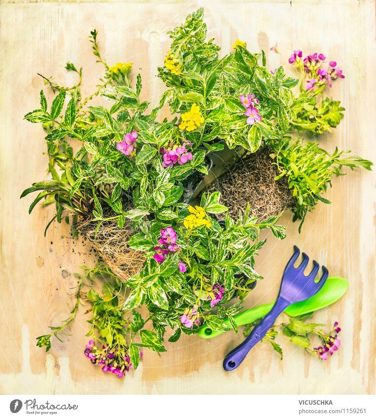 Bodendecker Pflanzen für Garten Stil Design Freizeit & Hobby Sommer Dekoration & Verzierung Gartenarbeit Natur Frühling Herbst Holz Hintergrundbild Gerät