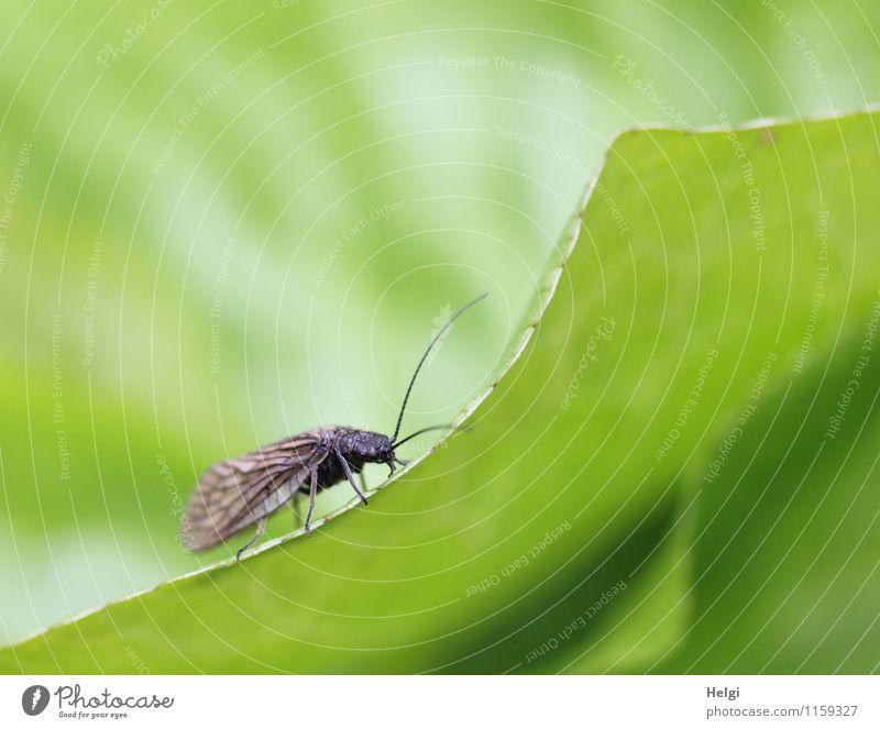 am Rand lang... Natur Pflanze grün Blatt Tier Umwelt Leben Frühling natürlich klein braun Park Wachstum Fliege stehen ästhetisch