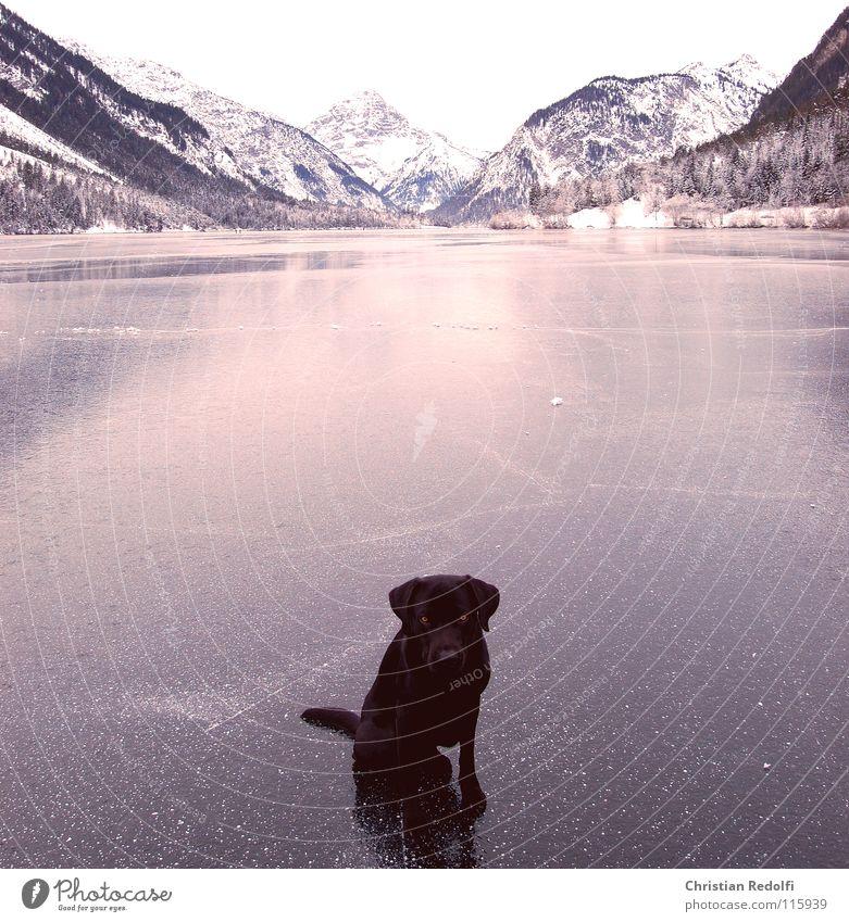 Ängstlich Schlittschuhlaufen Winter See Schlittschuhe Furche Reflexion & Spiegelung Hund Labrador Gebirgssee Hundeauge Hundeblick Angst Panik Sitzgelegenheit