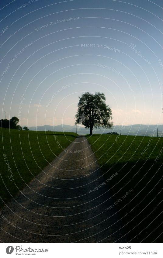 Weg zur Sonne Baum Straße Wege & Pfade Amerika
