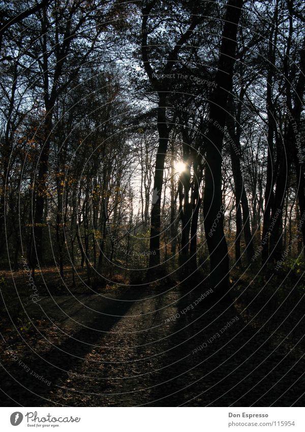 Lichtblick im Herbst Sonne Wärme Baum Blatt Park Wald blau grün Bremen Baumstamm Physik Bürgerpark Schatten Sonnenstrahlen