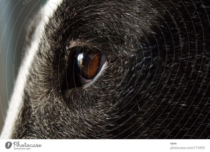 Was guckst du? Hund Dogge Kuh schwarz weiß Gefäße Reflexion & Spiegelung nah braun grau Igel Säugetier Nora Bullterrier Marco Scheune Haare & Frisuren alt dumm