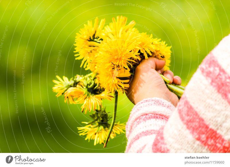 Picking Flowers Mensch Kind Natur schön grün Sommer Blume Hand Freude gelb Liebe Frühling feminin Glück Feste & Feiern Kindheit