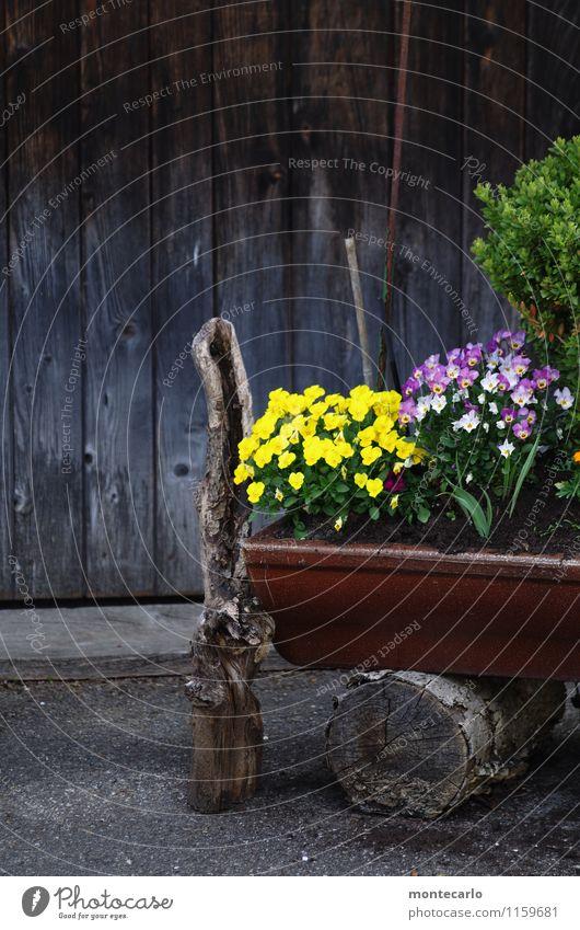 kindheitserinnerung | schwäbisch rustikal Umwelt Natur Pflanze Frühling Blume Blatt Blüte Grünpflanze Wildpflanze Baumstumpf Ast Dorf Hof Kübel Holzwand Stein