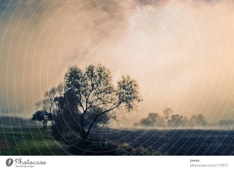 Nebelfelder Himmel Baum ruhig Erholung Landschaft Herbst Traurigkeit Denken träumen Stimmung Kraft Ordnung Spaziergang Romantik Idylle