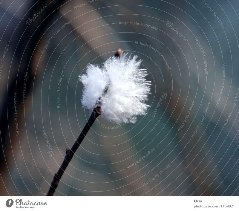 Wattebausch weich zart weiß Härchen leicht Schweben Tier kuschlig Makroaufnahme Nahaufnahme Vogel Feder Ast Wind Zweig Detailaufnahme Natur