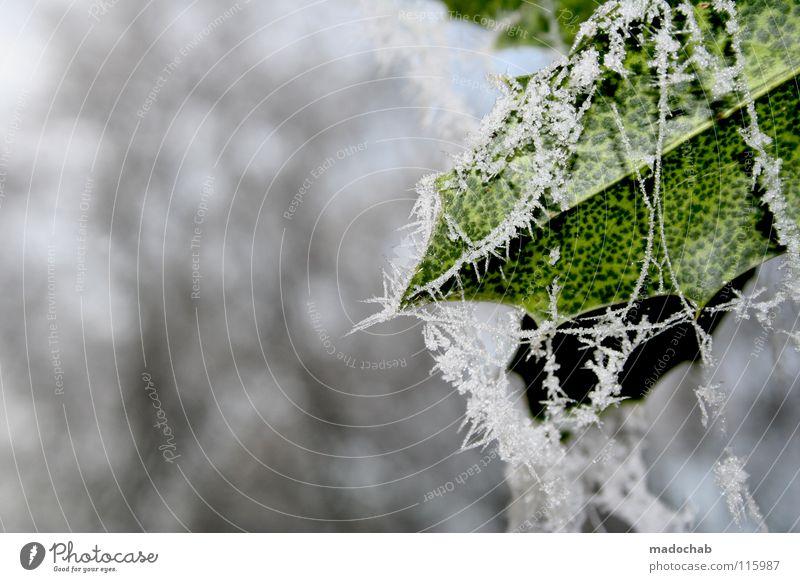 WINTER MOODS Winter frieren Tier Botanik Natur Blatt gefroren Stimmung kalt schön grün weiß Frost Kristallstrukturen Schnee mood cold frozen Coolness white