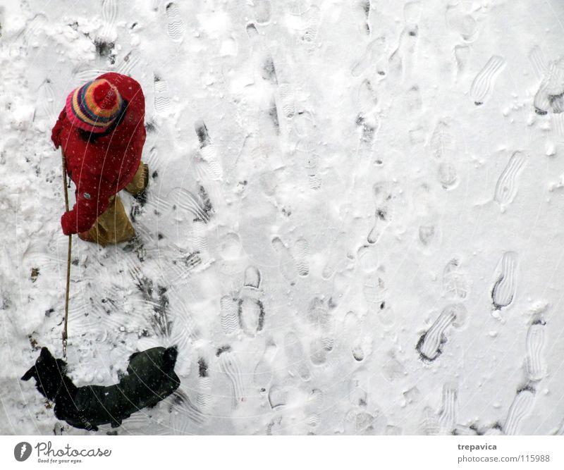 frau und hund Winter Hund weiß kalt rot schwarz Dezember Tier Haustier 2 Freundschaft Spaziergang gebunden angekettet Zusammensein Partnerschaft Einsamkeit