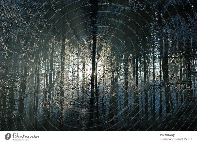 Draussen vom Walde ... Natur Winter Frost Fantasygeschichte spukhaft Märchenwald