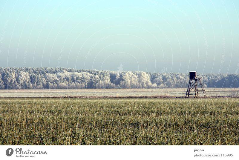 Winteranfang Feld Wald Raureif Baum Hochsitz kalt Panorama (Aussicht) ruhig Brandenburg Himmel Frost Schönes Wetter Ferne Schnee