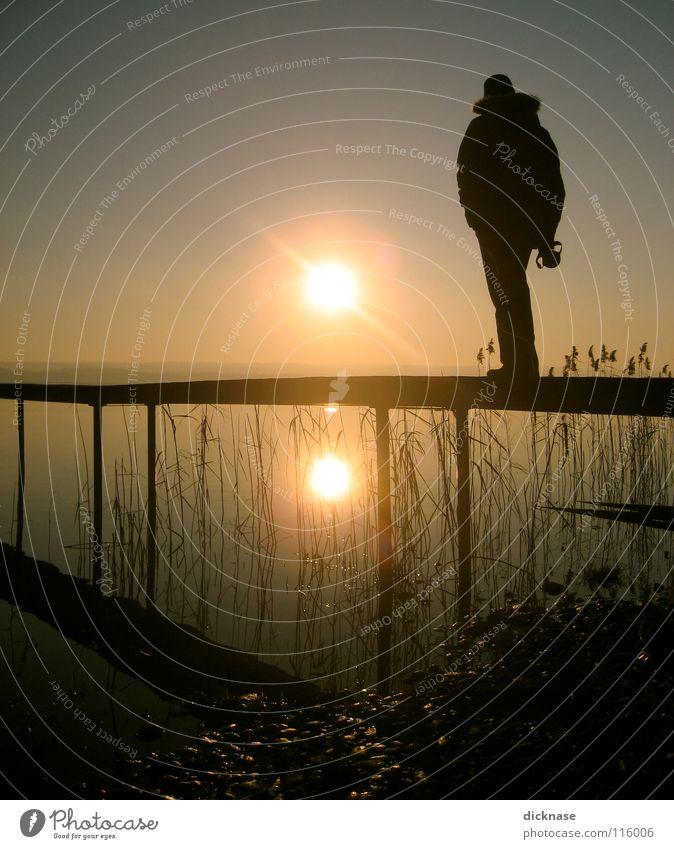 Endless Summer™ vol.01 Mann Sonne Winter kalt Erholung träumen See warten planen Schilfrohr Steg Typ Bayern Aufenthalt vergessen Inspiration
