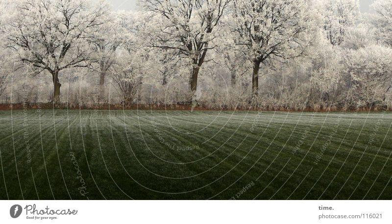 Überall Puderzucker, freut sich Lukas Winter Schnee Eis Frost Baum Gras Sträucher Wiese Feld grün Kraft Zufriedenheit Umwelt Vergänglichkeit Wachstum Baumstamm