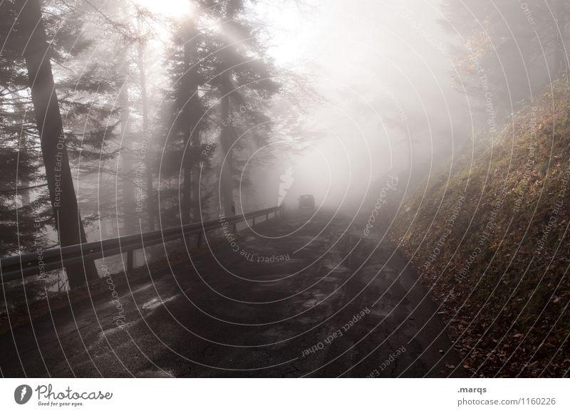 Ausfahrt Ausflug Umwelt Natur Landschaft Urelemente Sonnenlicht Klima Schönes Wetter Nebel Baum Verkehr Straße Leitplanke fahren außergewöhnlich Stimmung Ziel