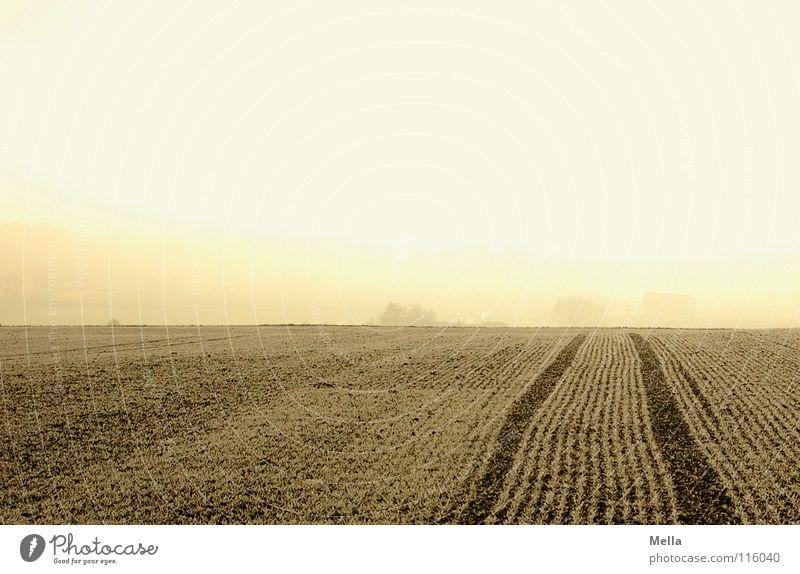 Kalter Morgenacker II Winter kalt Schnee Arbeit & Erwerbstätigkeit Eis hell Feld Nebel frisch Frost Spuren Landwirtschaft Amerika gefroren frieren Furche
