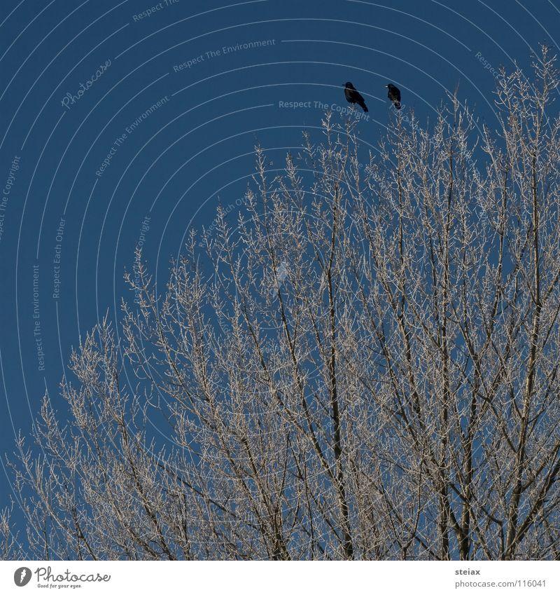 Friendship Himmel Baum Winter schwarz kalt Schnee Vogel Sehnsucht Raureif Rabenvögel Krähe