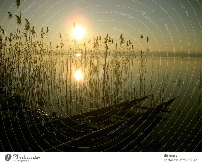 Verträumt™ Mann Sonne Winter Erholung kalt See Denken träumen warten Gleise Schilfrohr Steg Bayern Typ verloren Inspiration