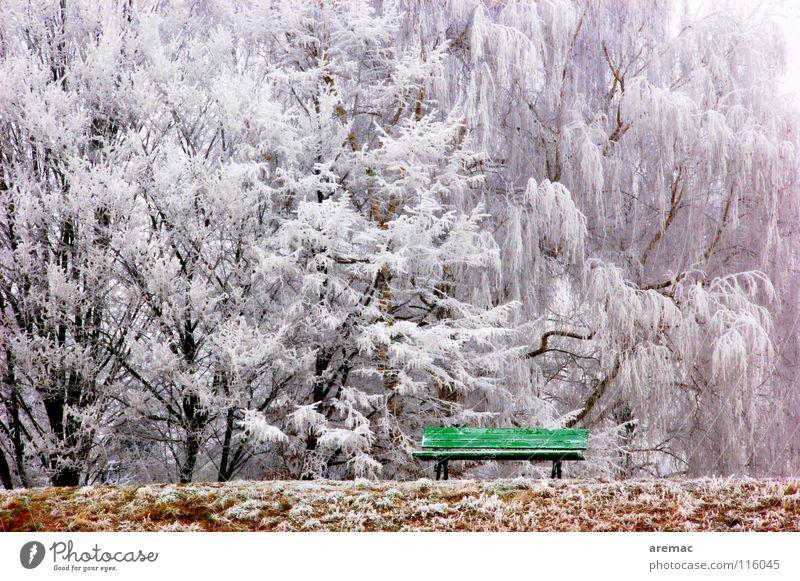 Ruheplatz Natur Baum grün Winter ruhig Wald kalt Schnee Landschaft Frost Bank Parkbank Eishaus