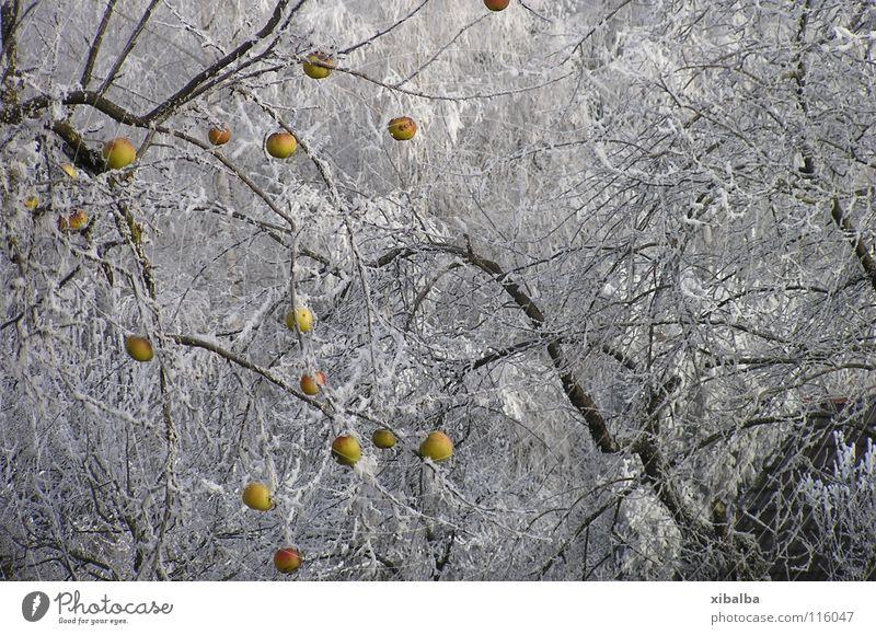 Tiefkühlkost Natur Baum Winter Farbe Wald kalt Schnee Garten Park Eis Umwelt Zeit Wachstum Frost rund Wandel & Veränderung