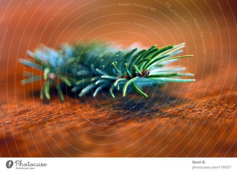 Duft Natur grün Holz Tanne Maserung Nadelbaum Tannennadel Holztisch Tischplatte